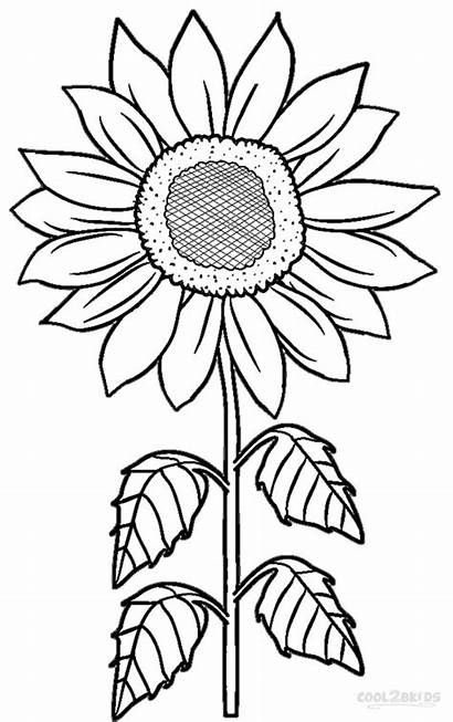 Coloring Pages Printable Flower Sunflower Nature Craft