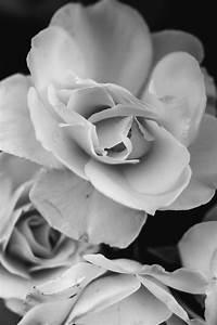 Plaid Noir Et Blanc : des photos en noir blanc natacha birds ~ Dailycaller-alerts.com Idées de Décoration
