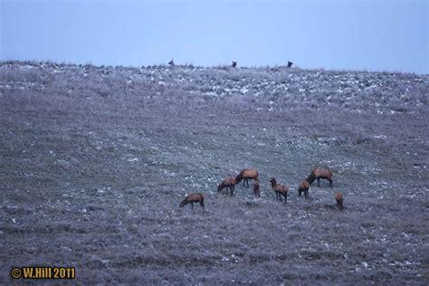 elk pennsylvania season results end zone 1st week gilbert winslow viewing hunt morning hill near area
