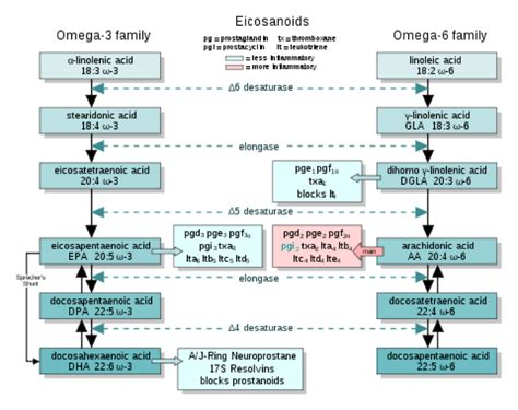 formation courte cuisine why fish stomps flax as a source of omega 3