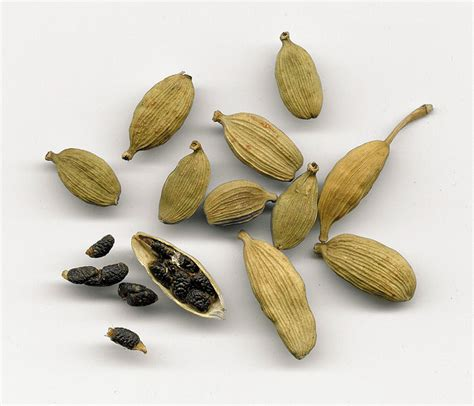 cardamom seeds aromatherapy tips and tricks cardamom seed elettaria cardamomum