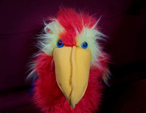 photo stare parrot puppet toy bird  image