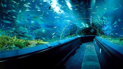 shanghai aquarium crossley architects