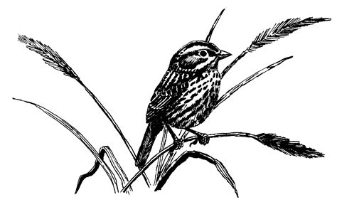 sparrow clipart black and white sparrow clipart best