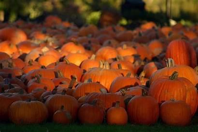 Pumpkin Wallpapers Desktop Pixelstalk