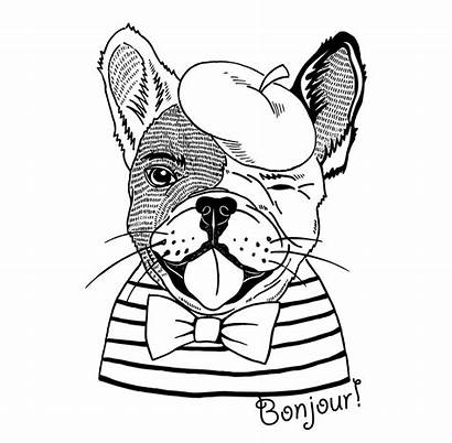 Bulldog Coloring French Pages Bulldogs Line Drawing