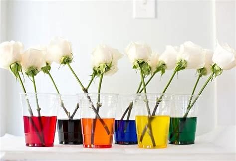 dye rainbow flowers