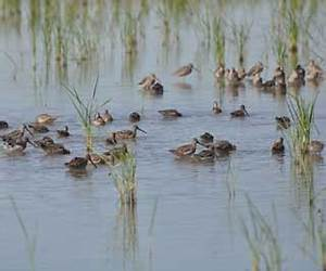 Migratory birds on journey to Texas' Gulf region | NRCS Texas
