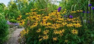 Was Blüht Im Schatten : mit diesen 12 stauden pflanzt du das perfekte sommerbeet willkommen in franks kleinem garten ~ Markanthonyermac.com Haus und Dekorationen