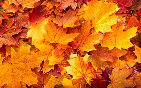 leaves background | Fall leaves background, Autumn leaves ...
