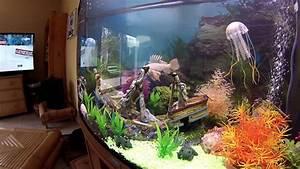 Aquarium Avec M U00e9duses Tueuses