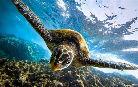 donate  ocean conservancy