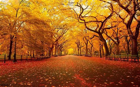 Autumn Fall Desktop Backgrounds by Cool Fall Backgrounds Wallpaper Cave