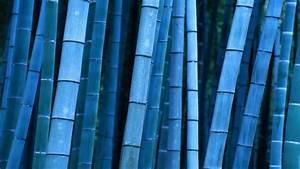 Bamboo Desktop Wallpapers