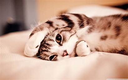 Cat Funny Wallpapers Lazy Background Cats Desktop