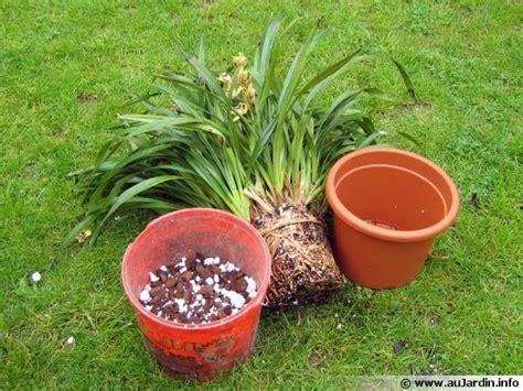 tailler une orchidee en pot le rempotage des orchid 233 es