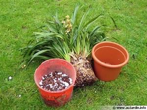 Rempoter Une Orchidee : le rempotage des orchid es ~ Mglfilm.com Idées de Décoration