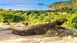 Boat Trip Around Komodo Island by Komodo Tour Package Komodo Island Trip Flores Tour