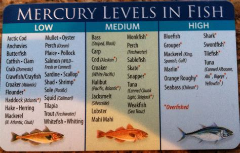 mercury fish levels foods avoid seafood pregnancy pregnant during safe level tuna food pollock nutrition low health mackerel canned holistic