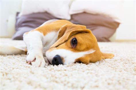 犬 腎 不全 末期