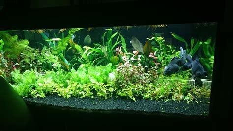 plantes pour aquarium eau douce 28 images aquarium eau douce plantes plante artificielle