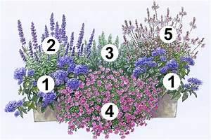 Welche Pflanzen Passen Zu Rosen : trendige blumenk sten zum nachpflanzen balkon lila und ~ Lizthompson.info Haus und Dekorationen
