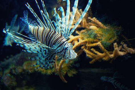 aquarium boulogne sur mer nausicaa l aquarium g 233 ant de boulogne sur mer