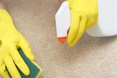 Get Rid Of The Odor For Good Professional Carpet Cleaning Central Coast Nsw What Is A Maker Called To Remove Cat Urine Groupon Atlanta Ga Naples Florida Cleaners How Clean Black Nail Polish Off Yellow Dog Vomit Runner By The Foot