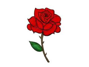 dozen roses pictures to pin on pinsdaddy