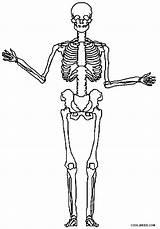 Skeleton Coloring Pages Printable Cool2bkids Bones Skeletons Halloween Sheets Skull Bone Visit sketch template