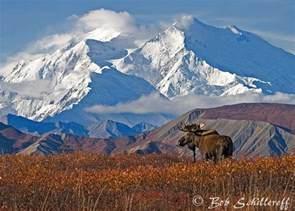 Alaska Scenery Moose