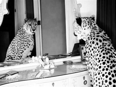 cheetah   mirror fine art print  emma rian
