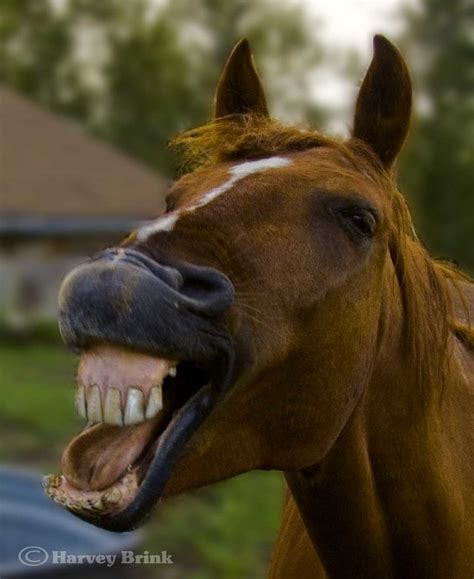 smiling horse occasionally  reasons unknown