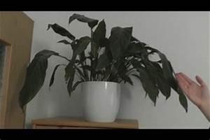 Pflanzen Die Kaum Licht Brauchen : tageslichtlampe f r pflanzen so funktioniert die k nstliche beleuchtung ~ Markanthonyermac.com Haus und Dekorationen
