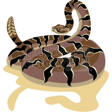 poisonous rattle snake ready  strike clipart royalty