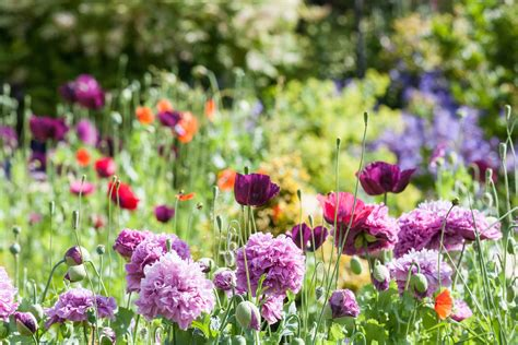 flower garden plants types of garden flowers flowers ideas for review