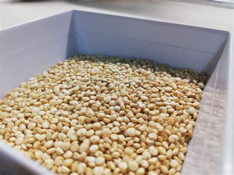 quinoa cucinare come cucinare la quinoa guida alla cottura fragolosi