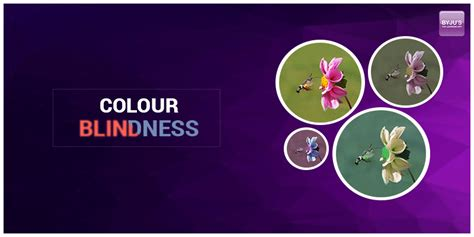 treatment for color blindness colour blindness causes symptoms diagnosis with the
