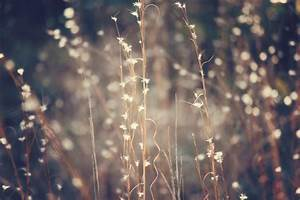 Sparkling, Fairy, Lights, Art, Print, By, Beth