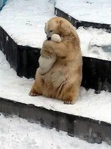 The Wild Hug : 17 best images about animal on pinterest cute funny animals cats and shoebill ~ Eleganceandgraceweddings.com Haus und Dekorationen