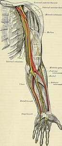 Radial Tunnel Syndrome  Causes  Symptoms  U0026 Treatment