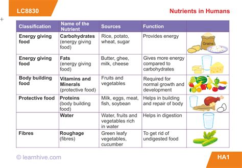 Learnhive  Icse Grade 9 Biology Human Nutrition Lessons