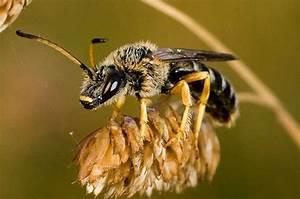 Wie überwintern Bienen : wie berwintern wildbienen bienen natur ~ A.2002-acura-tl-radio.info Haus und Dekorationen