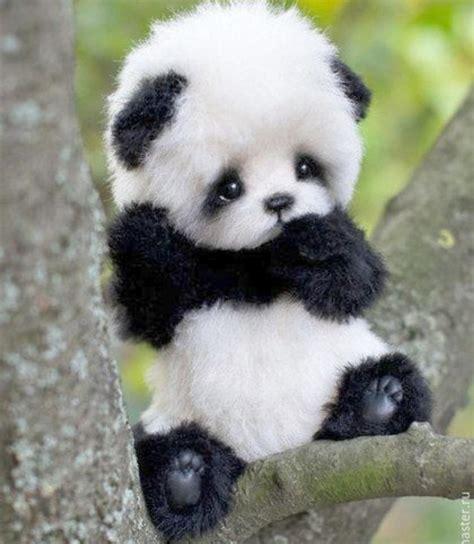 Cute Panda Aww