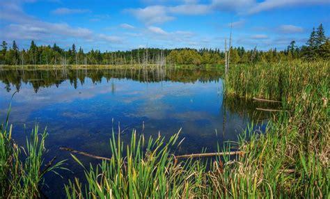 Making Biomass Big Business Manitoba Iisd