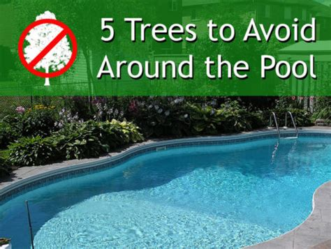 best plants around swimming pool 5 trees to avoid ryno lawn care llc