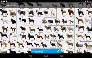 Cat Breed Poster - Cats Types