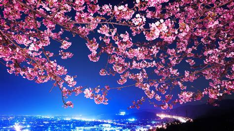 Flowers, Cityscape, Tokyo, Cherry Blossom Wallpapers Hd