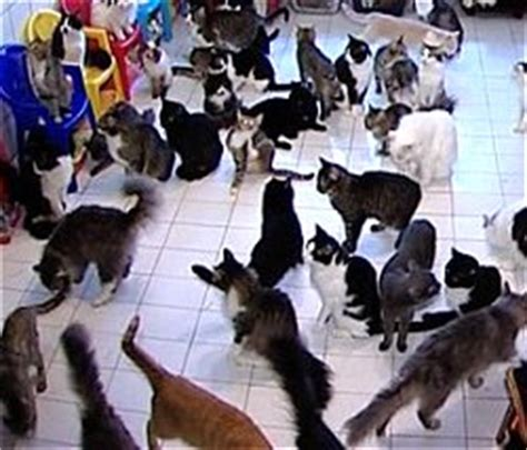 how many cats is too many in an apartment