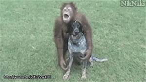 Dog GIF - Find & Share on GIPHY